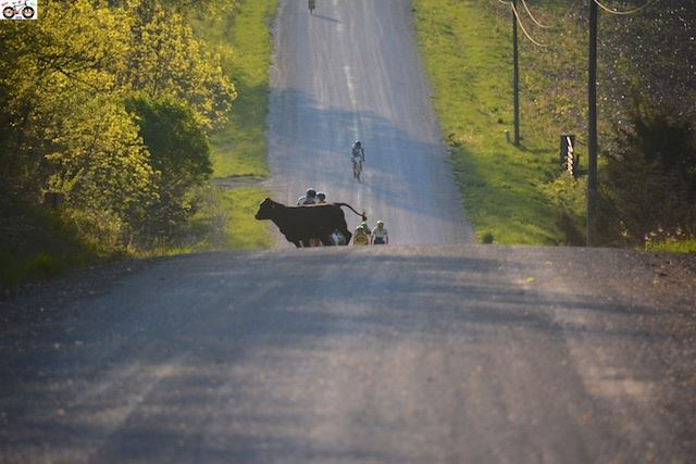 Holy cow! Kleidosty directly behind the cow. Jensen would dart up the hill from the left and take the KOM in the race.